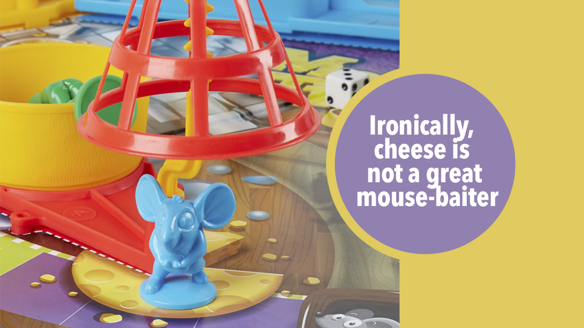 mouse trap mouse bait cheese