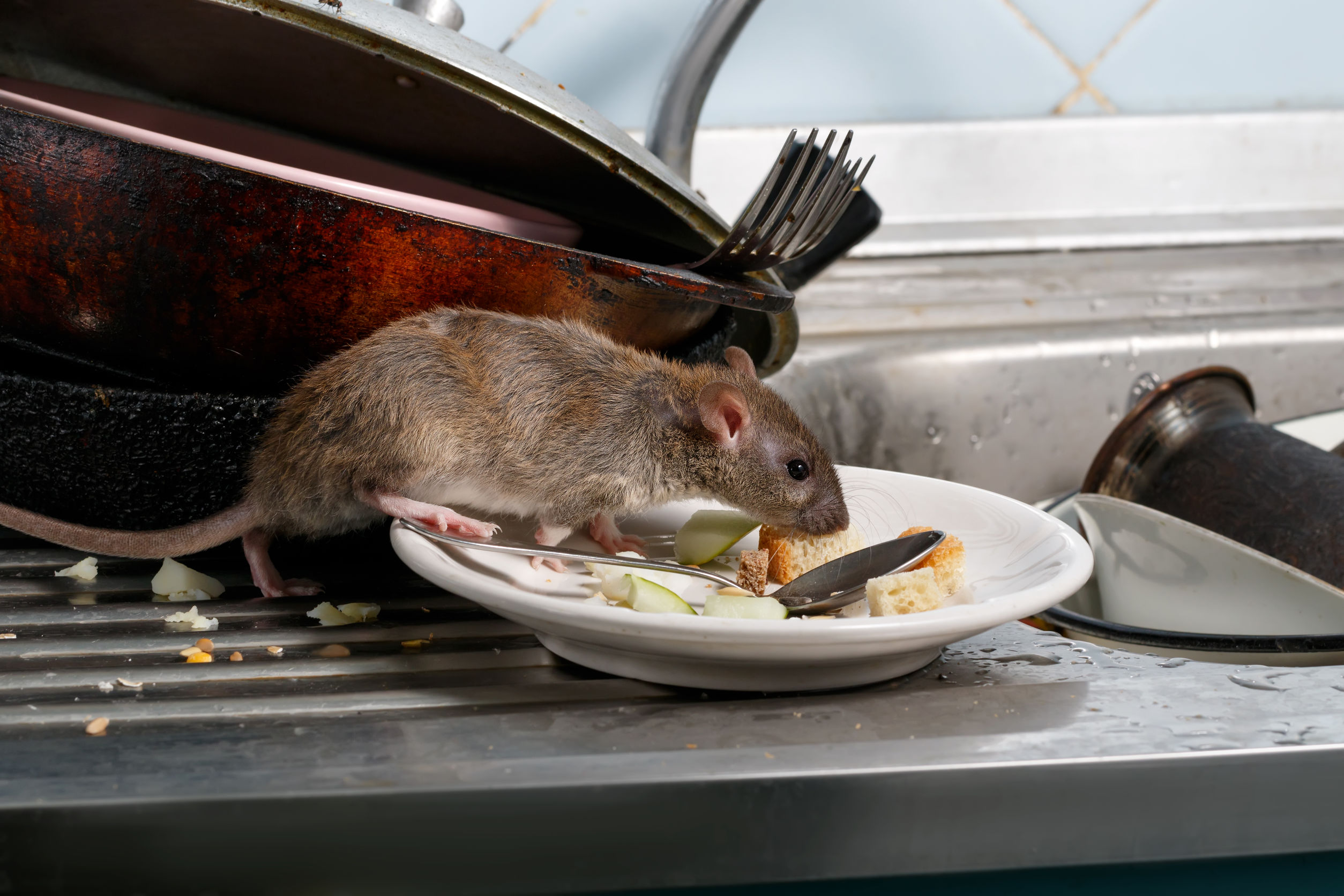 rat-bpca-food-public-health