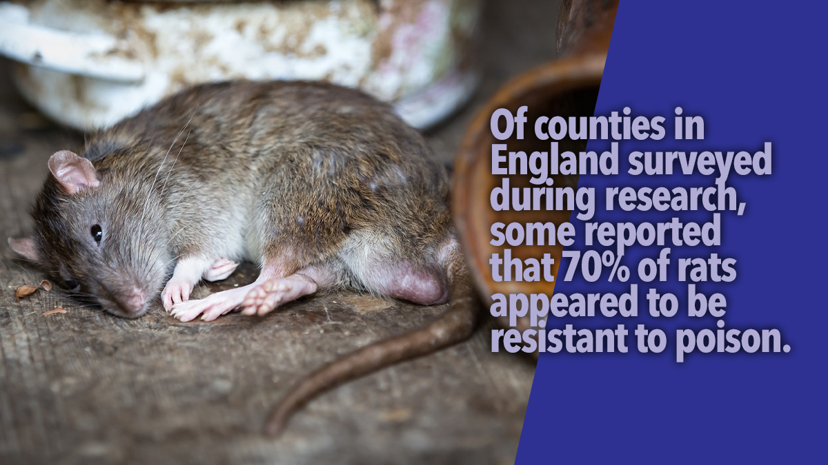 resistant to rodenticide