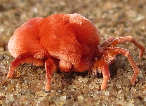 Pest advice for controlling Red Spider Mites