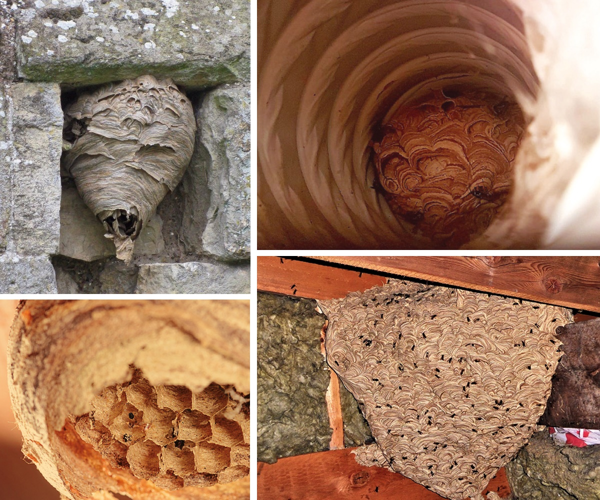 Wasp nests come in all shapes and sizes