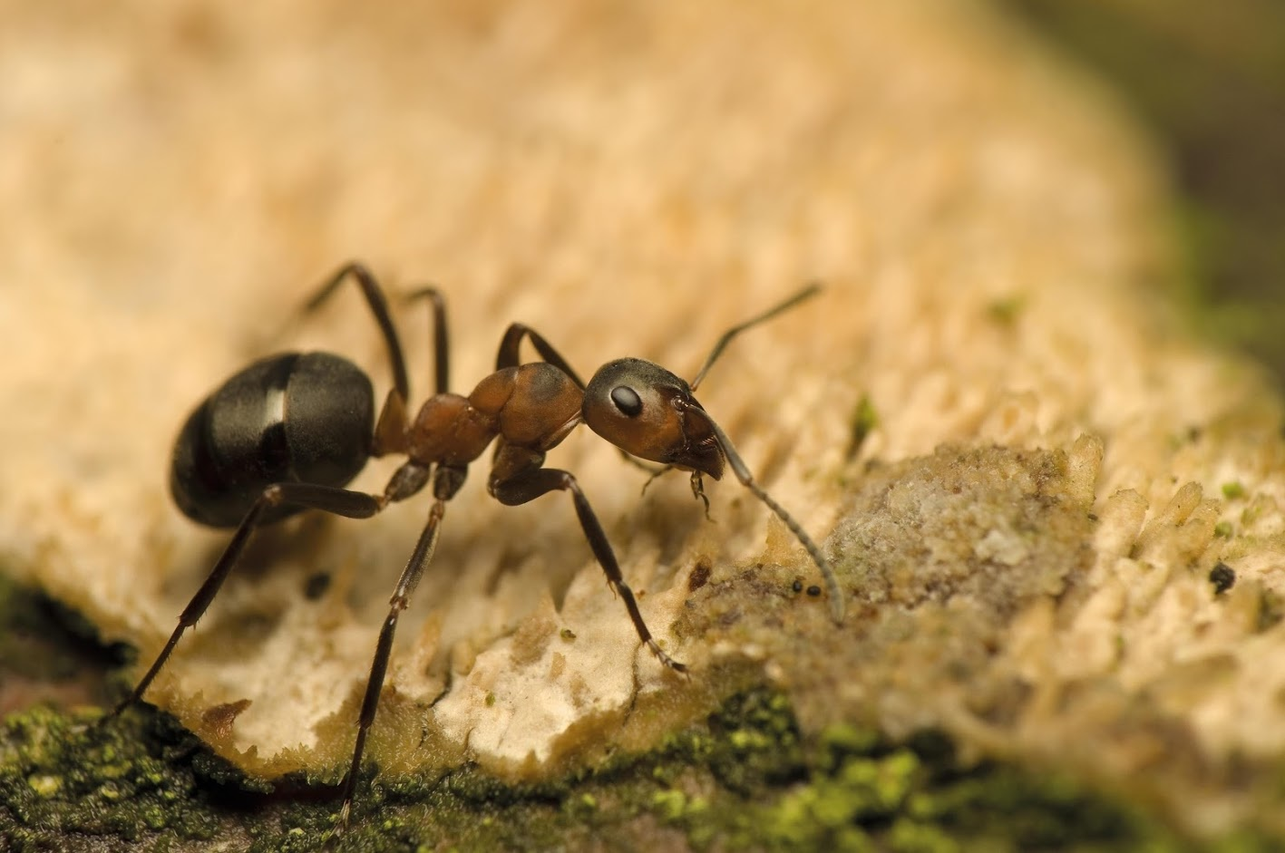 a to z of pests pest advice support and guidance from bpca
