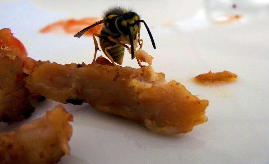 Wasp on food