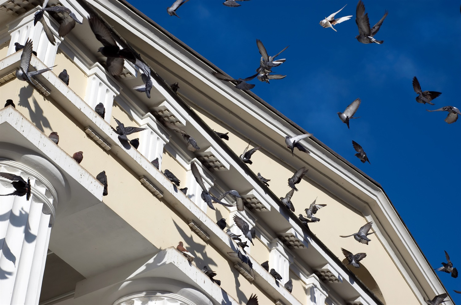 birds-on-a-building-about-title-image