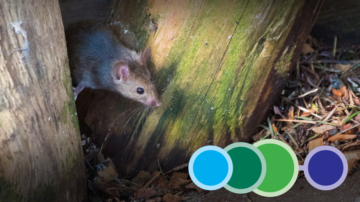 142 On the Farm Practical Pest Management of Rodents and Insects 3