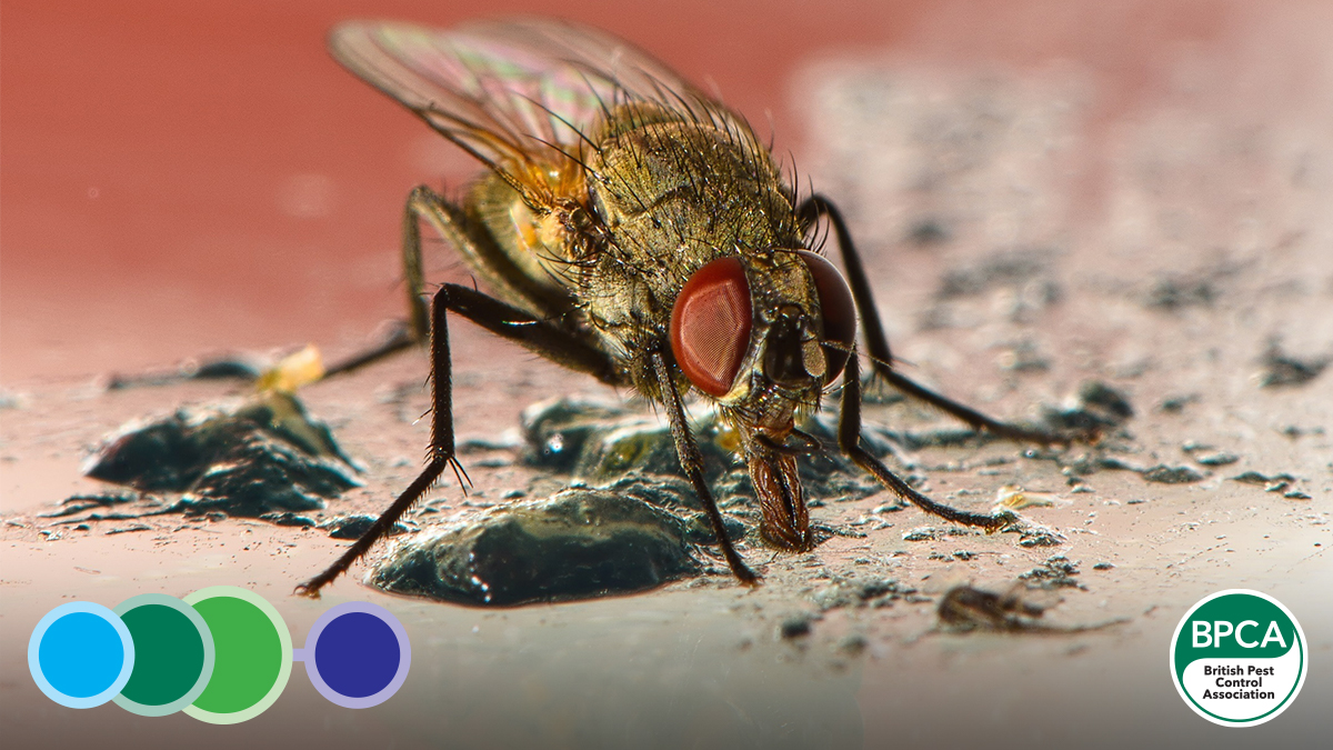 Flies on food sites training programme online for pest control and management professionals