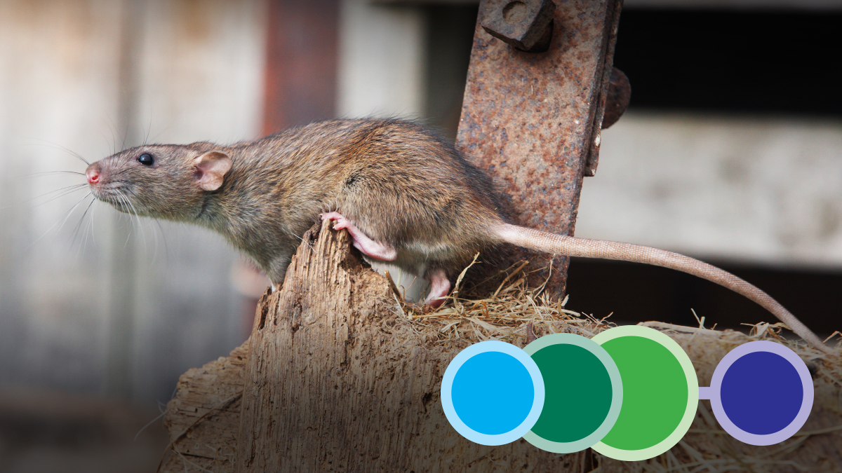 On the Farm Practical Pest Management of Rodents and Insects